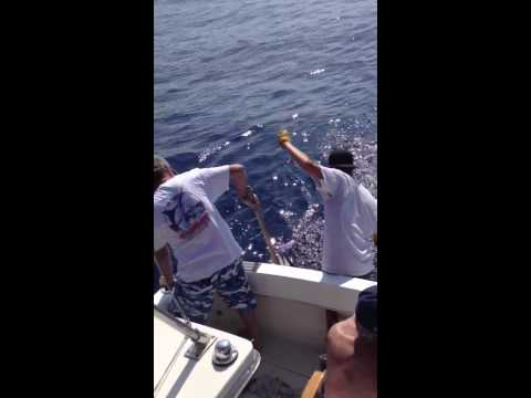 Short Nosed Spearfish Catch off Kona